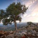 Wycieczki na Górę Synaj